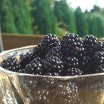 A great year for blackberries