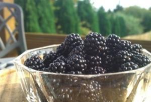 Blackberries in Pant